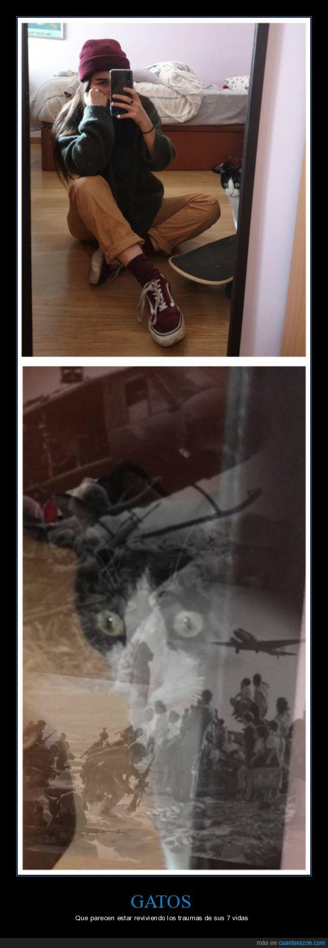 cara,gato,trauma