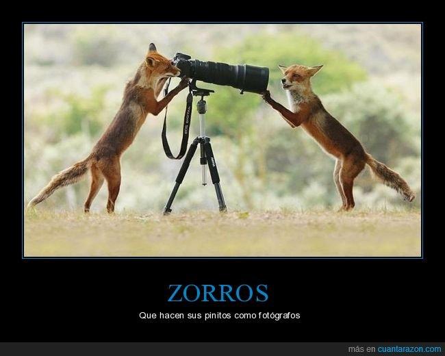 cámara,fotos,zorros