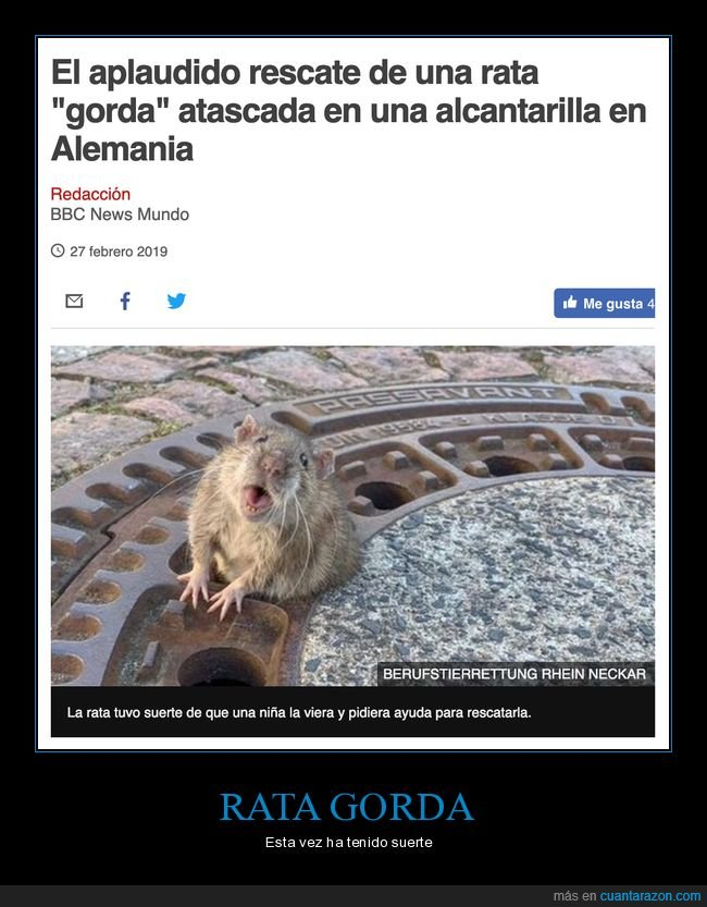 alcantarilla,gorda,rata,rescate