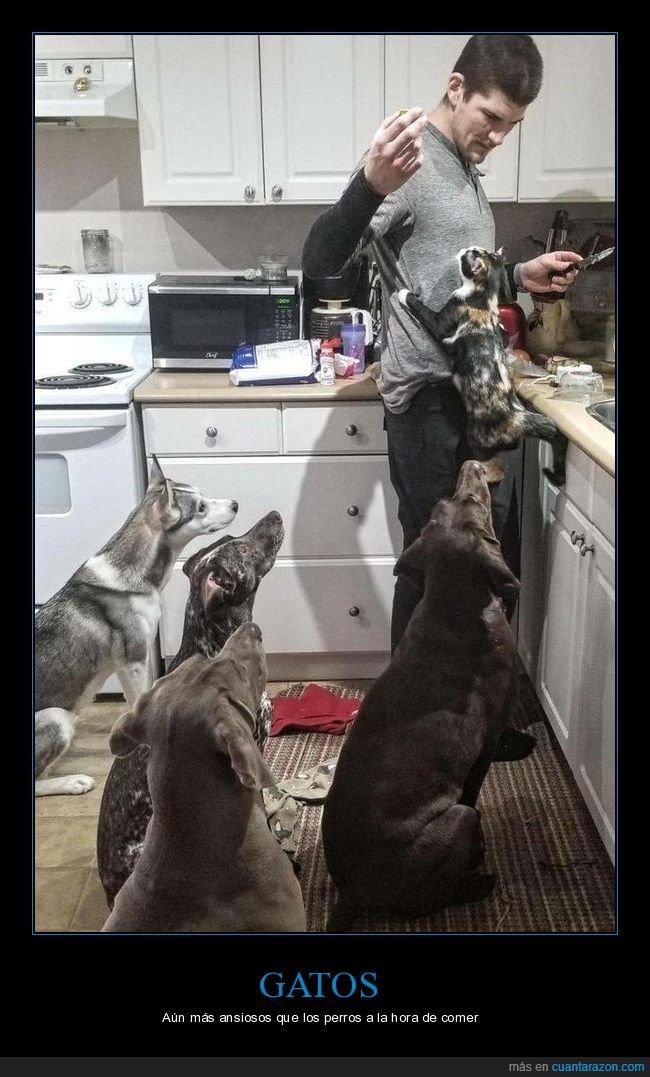 comida,gatos,perros