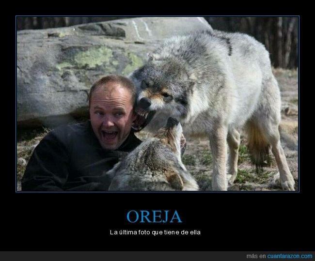 lobo,mordiendo,oreja