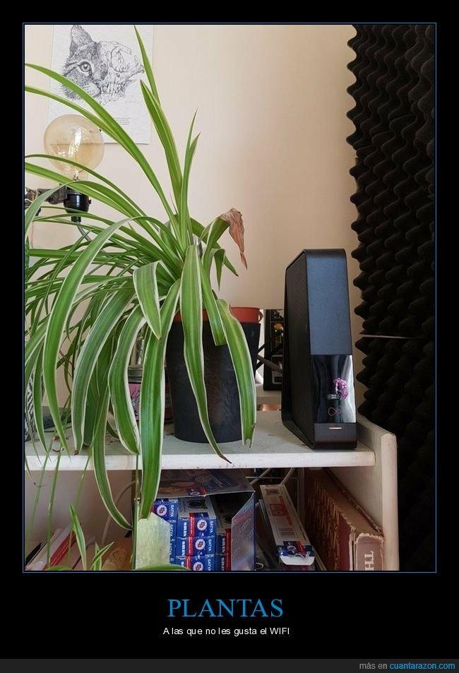 planta,router,wifi