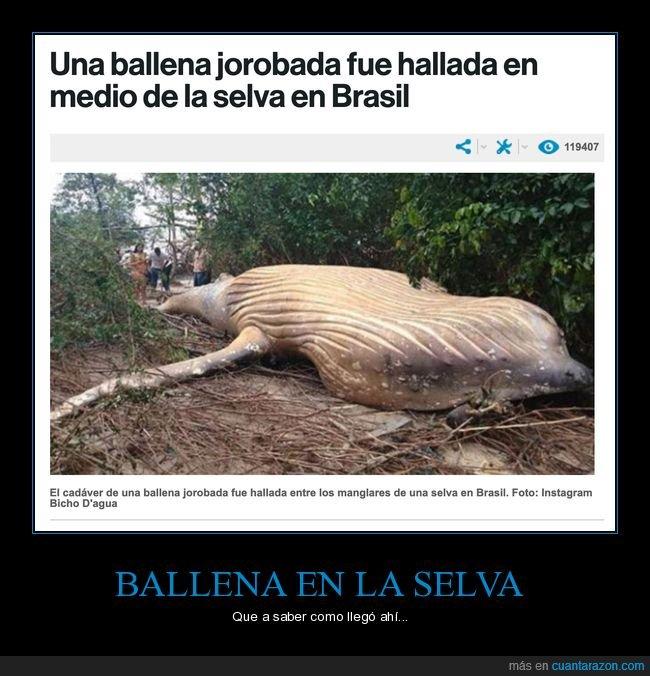 ballena,brasil,selva