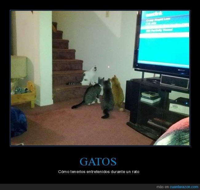 gatos,láser,mirando