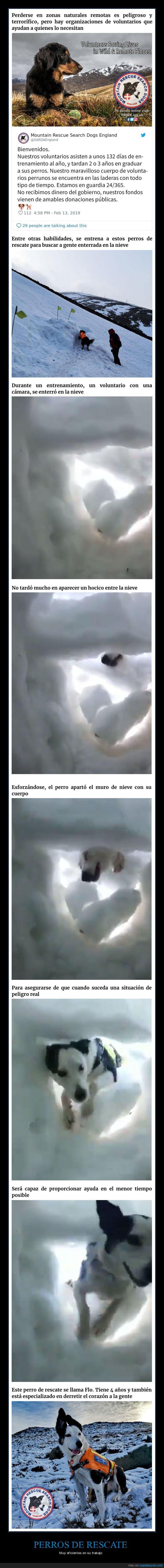 nieve,perros,rescate