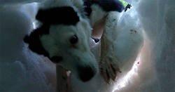 Enlace a Este hombre enterrado en la nieve grabó al perro de rescate que lo salvó, y es precioso
