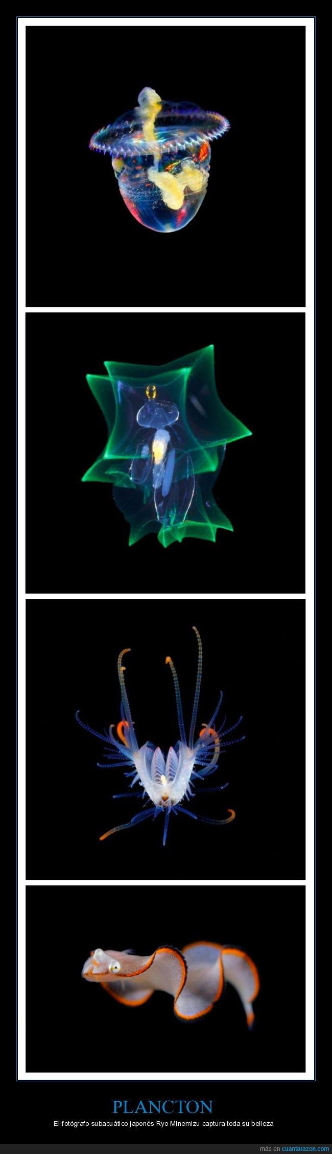 curiosidades,fotografía,plancton,ryo minemizu