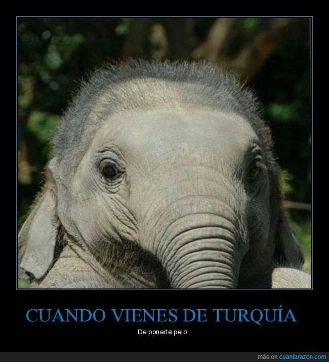 elefante,pelo,turquía