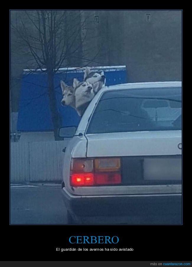 cabezas,cerbero,perros