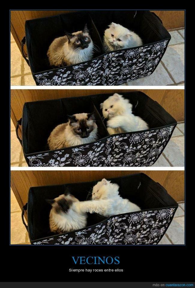 gatos,pelea,vecinos
