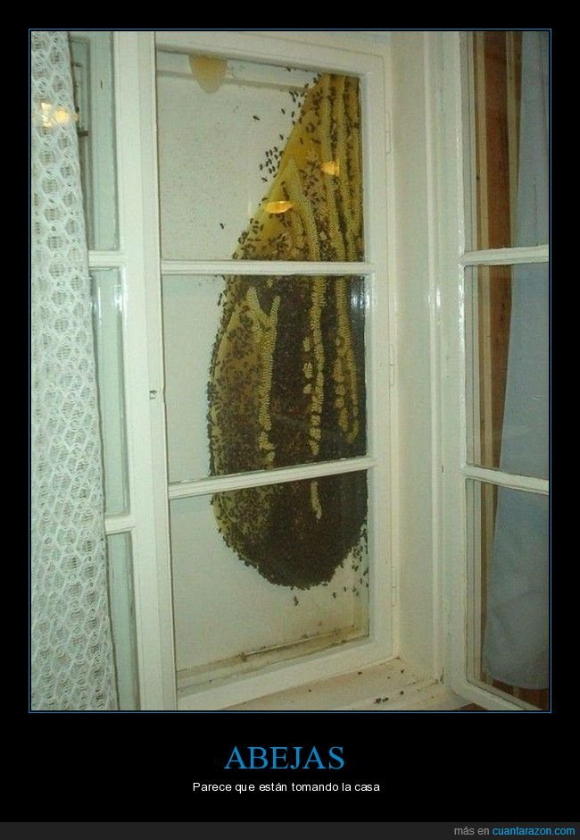 abejas,casa,panal