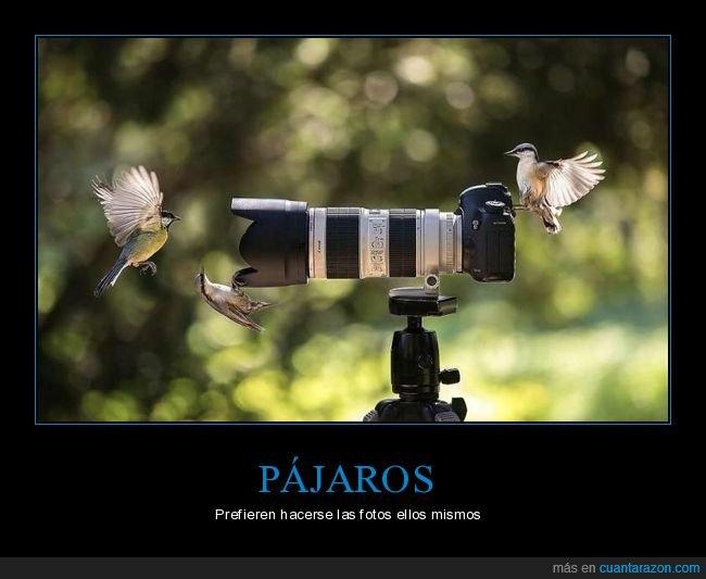 cámara de fotos,pájaros