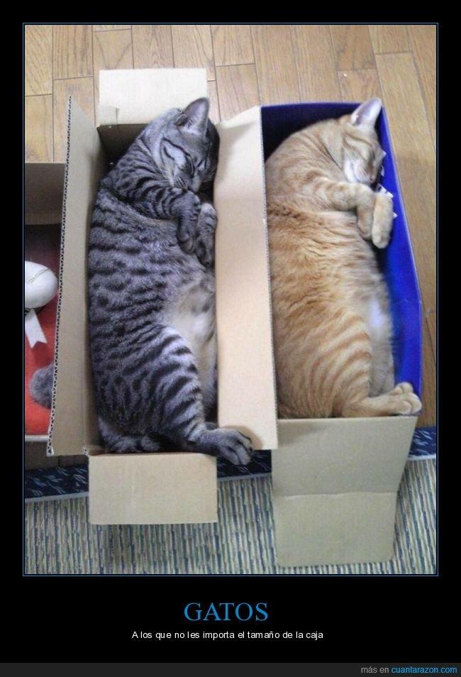cajas,durmiendo,gatos