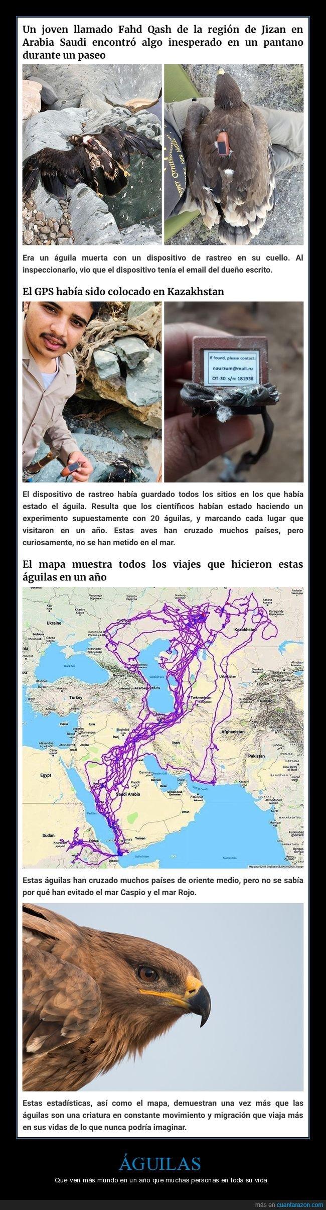 águila,mapa,rastreo,recorrido