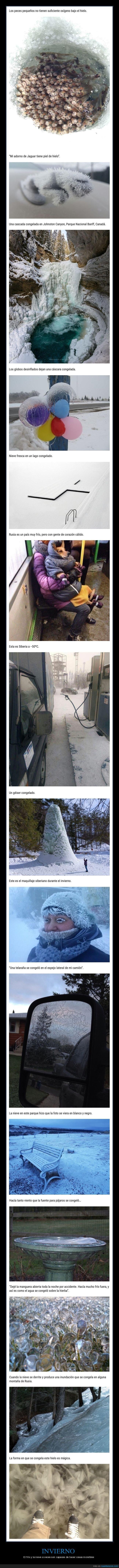 frío,hielo,invierno,nieve
