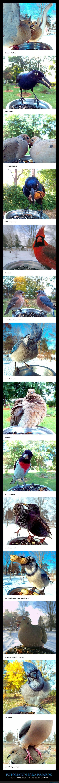 fotomatón,pájaros