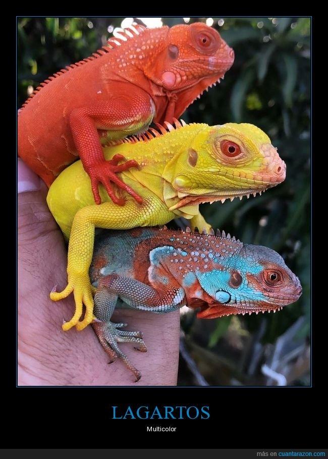 colores,lagartos