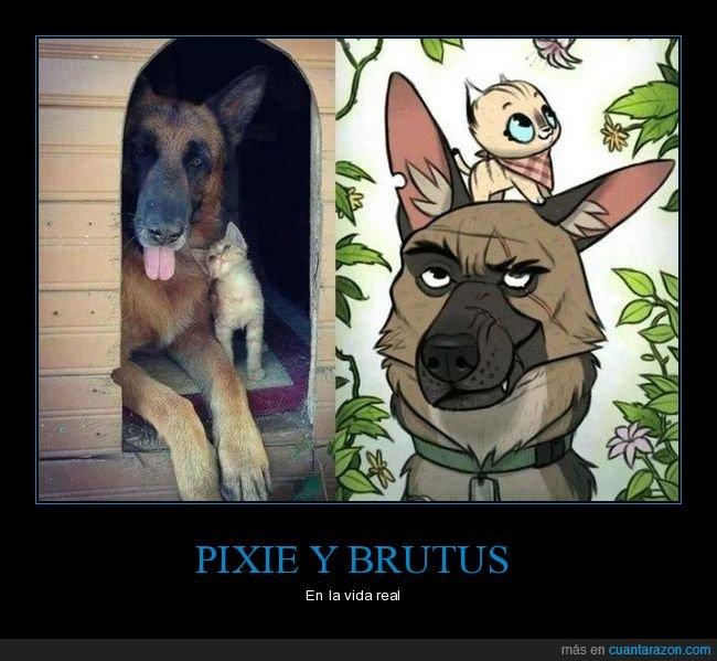 gatos,perros,pixie y brutus