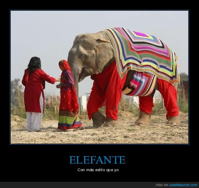 elefante,ropa,wtf