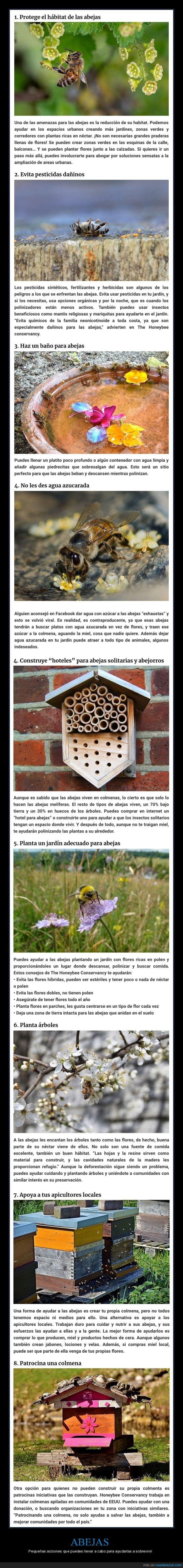 abejas,ayudar,sobrevivir