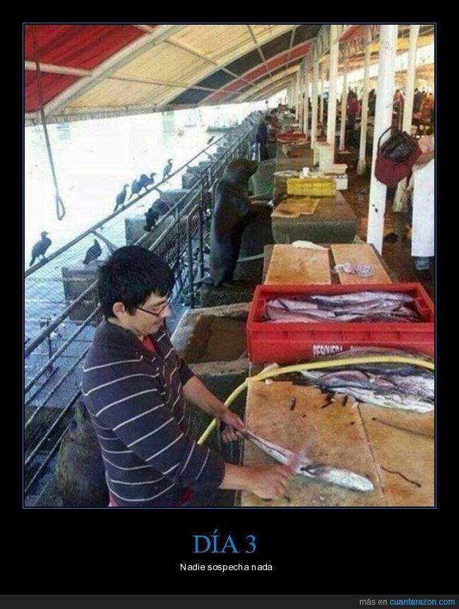 foca,pescadería,pescado,wtf