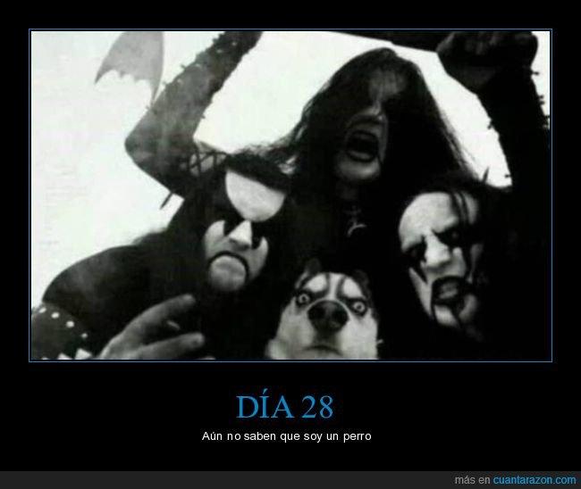 death metal,perros