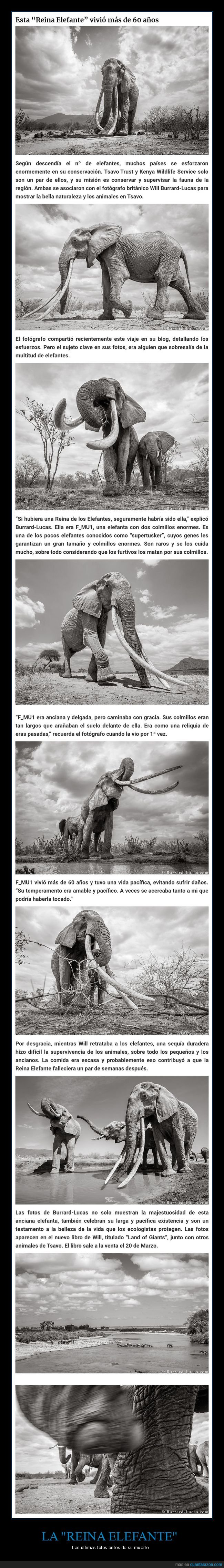 elefante,fotos,reina elefante