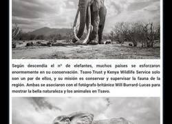 """Enlace a Las últimas fotos de la legendaria """"Reina Elefante"""" antes de su muerte"""