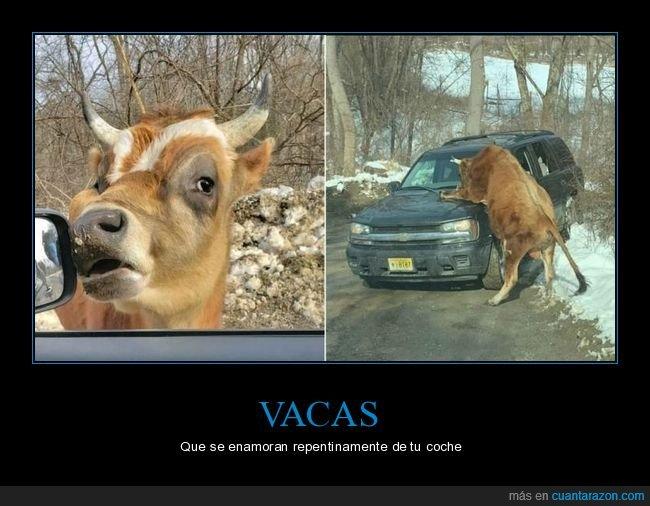 coche,vaca,wtf