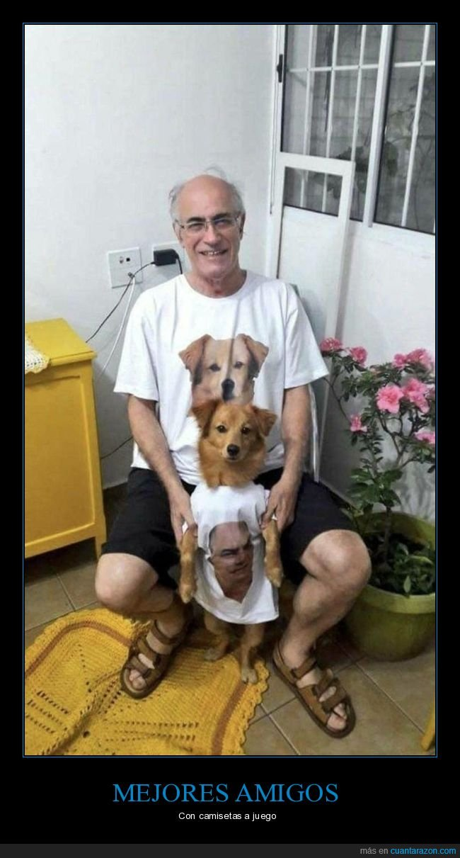 camiseta,cara,dueño,perros