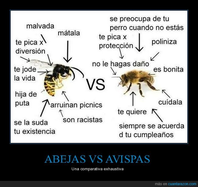 abeja,absurdo,avispa,comparativa