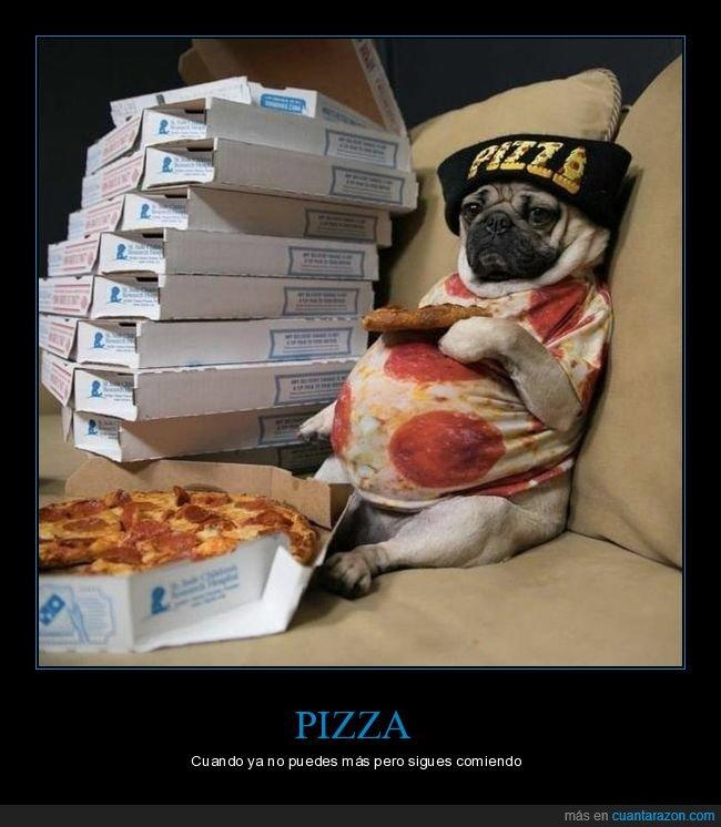 carlino,perro,pizza