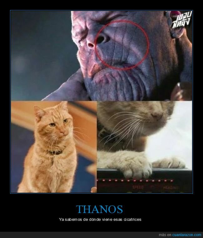 capitana marvel,cicatrices,gatos,goose,thanos