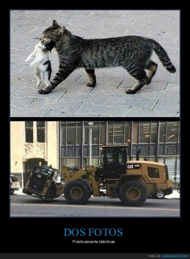 cachorro,cats,gatos,llevando