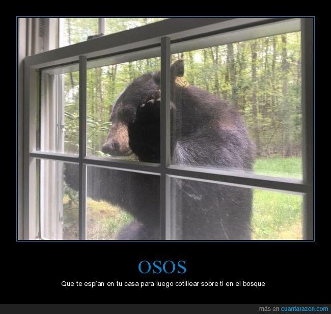 casa,oso,ventana