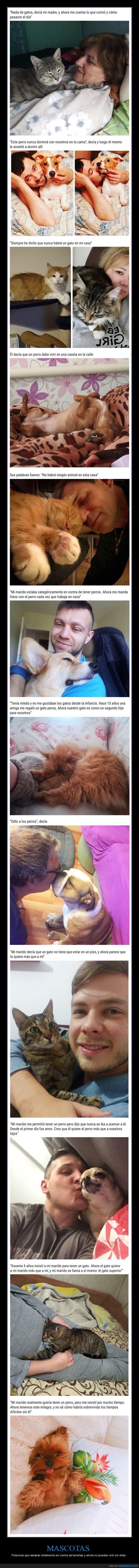 en contra,gatos,mascotas,perros