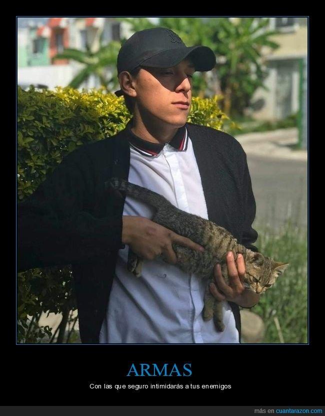 arma,gatos