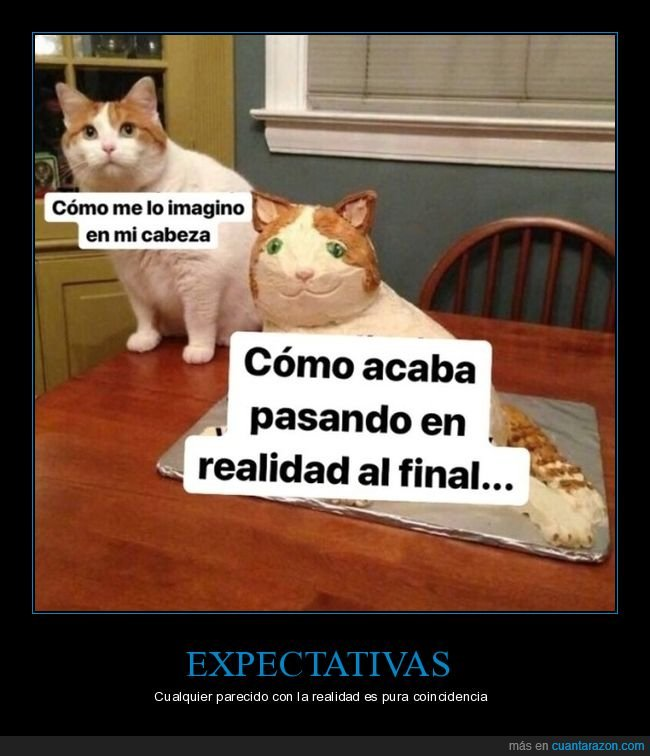 expectativas,gato,imaginar,mierder,realidad