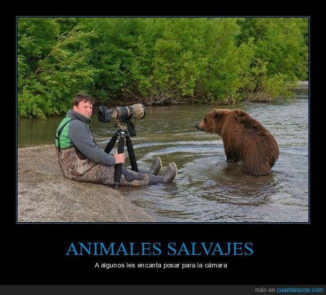 fotógrafo,oso