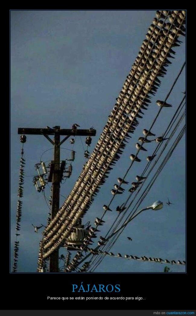 cables,pájaros,wtf