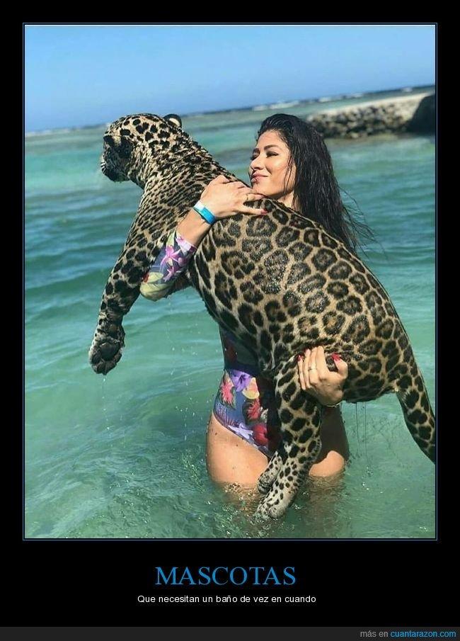 bañándose,leopardo,playa,wtf
