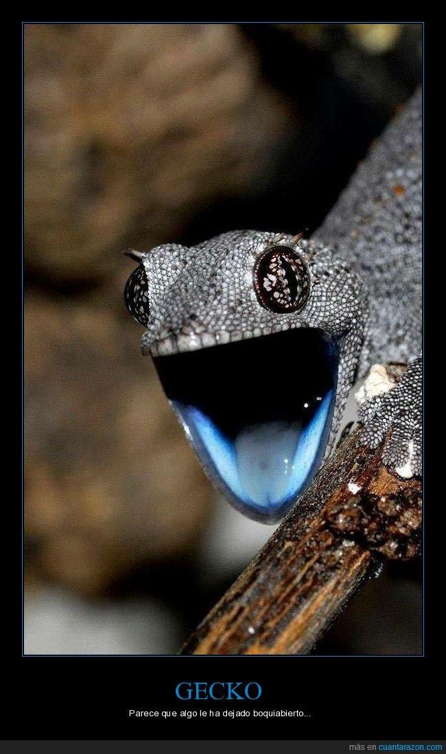 boca,cara,gecko