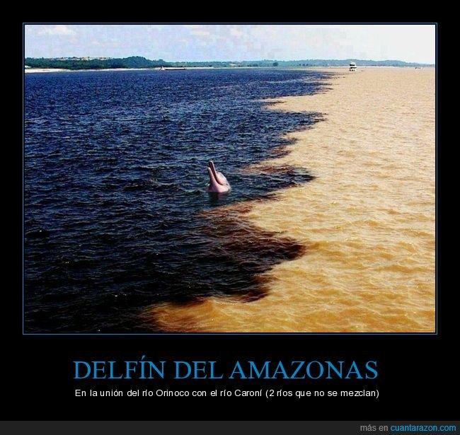 caroní,delfín del amazonas,orinoco,ríos