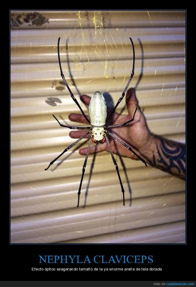 araña,araña de tela dorada,efecto óptico,gigante