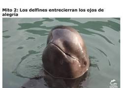 Enlace a Mitos sobre los delfines que te harán verlos con otros ojos
