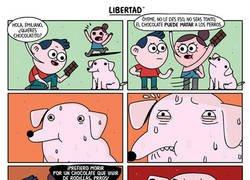Enlace a Libertad canina
