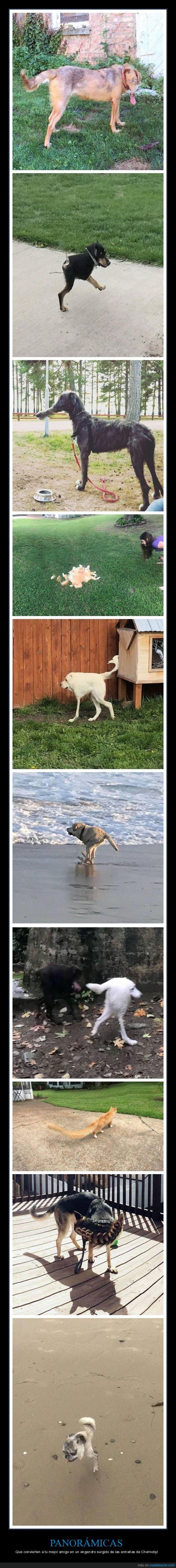 fails,panorámicas,perros