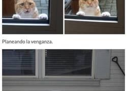 Enlace a Gatos suplicando entrar en casa