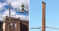 Enlace a Verizon expulsa temporalmente a un trabajador que usó su equipo de trabajo para rescatar a un gato