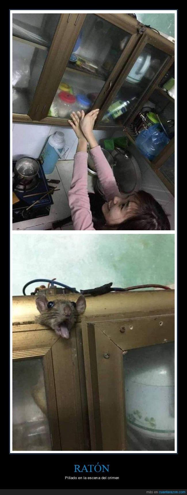 armario,pillado,puerta,ratón